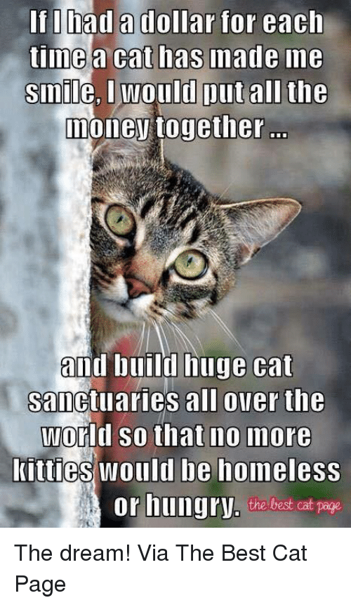 Homeless, Hungry, and Kitties: If I had a dollar for each  time  a cat has made me  Smile, would put all the  Donev together  and build huge cat  sanctuaries all over the  World so that no more  kitties would be homeless  or hungry, the best cat  page The dream! Via The Best Cat Page