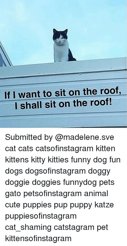 cute puppies: If I want to sit on the roof,  l shall sit on the roof! Submitted by @madelene.sve cat cats catsofinstagram kitten kittens kitty kitties funny dog fun dogs dogsofinstagram doggy doggie doggies funnydog pets gato petsofinstagram animal cute puppies pup puppy katze puppiesofinstagram cat_shaming catstagram pet kittensofinstagram
