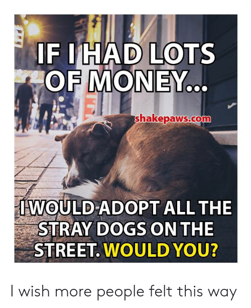 Dogs, Memes, and Money: IF IHAD LOTS  OF MONEY..  shakepaws.co  IWOULD ADOPT ALL THE  STRAY DOGS ON THE  STREET. WOULD YOU? I wish more people felt this way