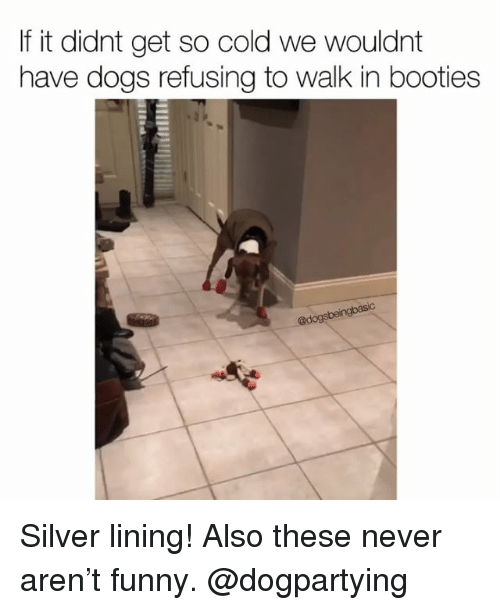 Dogs, Funny, and Memes: If it didnt get so cold we wouldnt  have dogs refusing to walk in booties  @d Silver lining! Also these never aren't funny. @dogpartying