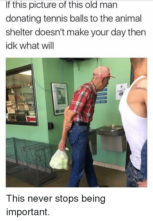Memes, Old Man, and Animal: If this picture of this old man  donating tennis balls to the animal  shelter doesn't make your day then  idk what will This never stops being important.
