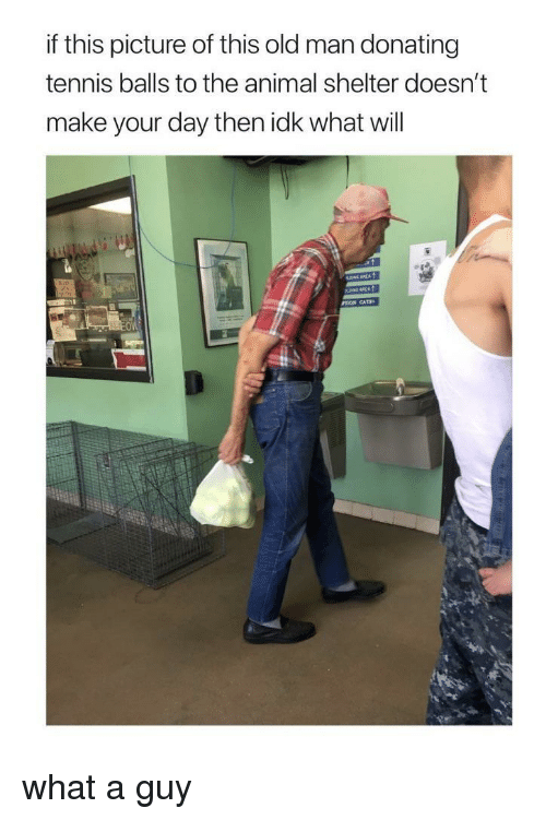 Old Man, Animal, and Animal Shelter: if this picture of this old man donating  tennis balls to the animal shelter doesn't  make your day then idk what will  OW what a guy
