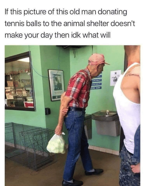 Memes, Old Man, and Animal: If this picture of this old man donating  tennis balls to the animal shelter doesn't  make your day then idk what will  ADNE  mON CATB