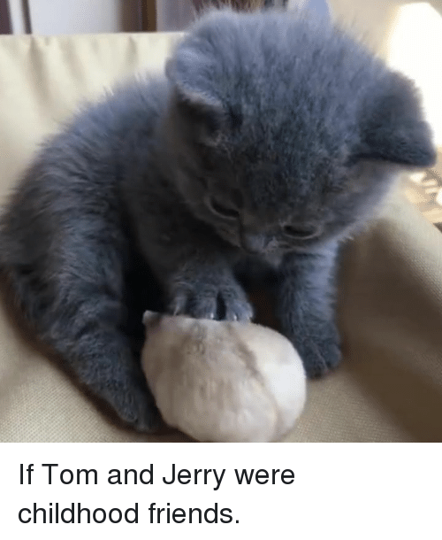 Tom And: If Tom and Jerry were childhood friends.