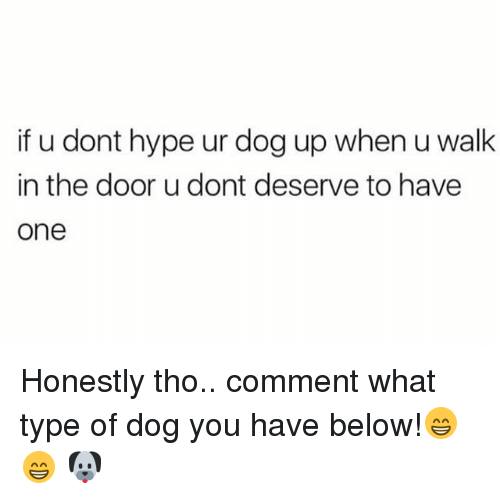 Hype, Tumblr, and Dog: if u dont hype ur dog up when u walk  in the door u dont deserve to have  one Honestly tho.. comment what type of dog you have below!😁😁 🐶