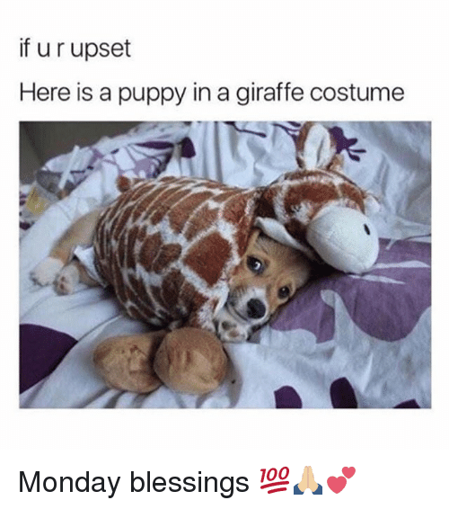 Memes, Giraffe, and Puppy: if u r upset  Here is a puppy in a giraffe costume  ん台 Monday blessings 💯🙏🏼💕