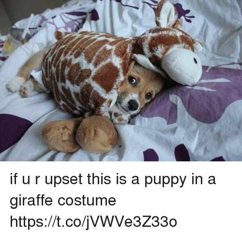 Giraffe, Puppy, and Girl Memes: if u r upset  this is a puppy in a giraffe costume https://t.co/jVWVe3Z33o