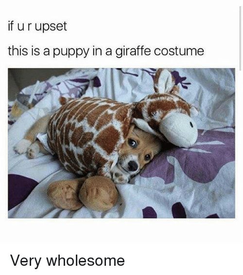 Memes, Giraffe, and Puppy: if u r upset  this is a puppy in a giraffe costume Very wholesome