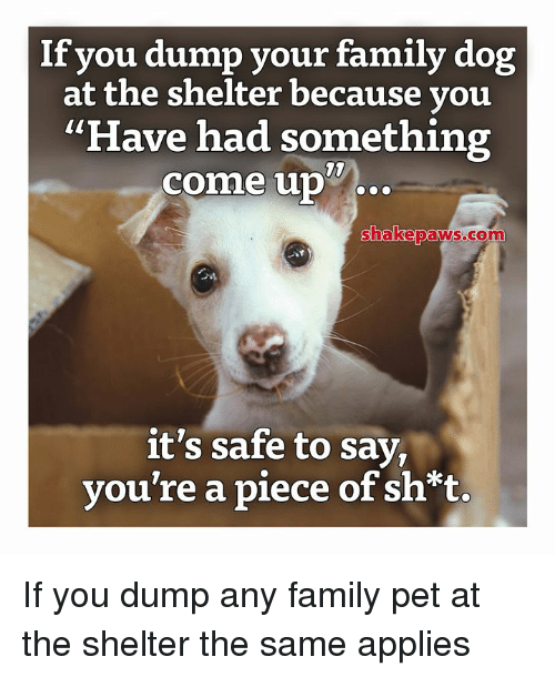 "Family, Memes, and 🤖: If you dump your family dog  at the shelter because you  ""Have had something  come up  10  wc  hakepaNS.com  it's safe to say,  vou're a piece of sh*t If you dump any family pet at the shelter the same applies"