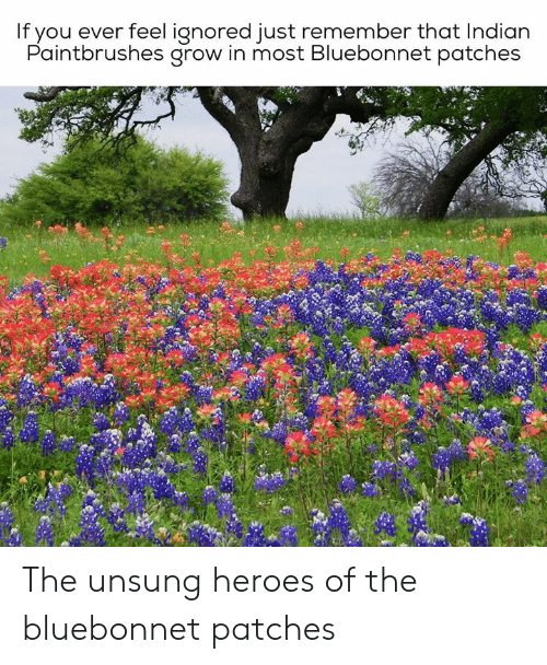 Heroes, Texas, and Indian: If you ever feel ignored just remember that Indian  Paintbrushes grow in most Bluebonnet patches The unsung heroes of the bluebonnet patches