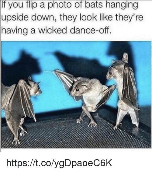 Wicked: If you flip a photo of bats hanging  upside down, they look like they're  having a wicked dance-off.  0 https://t.co/ygDpaoeC6K