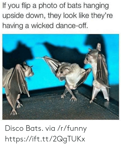 Wicked: If you flip a photo of bats hanging  upside down, they look like they're  having a wicked dance-off. Disco Bats. via /r/funny https://ift.tt/2QgTUKx