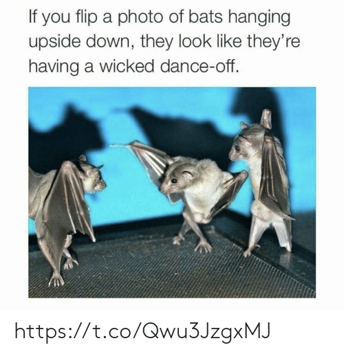 Memes, Wicked, and Dance: If you flip a photo of bats hanging  upside down, they look like they're  having a wicked dance-off. https://t.co/Qwu3JzgxMJ