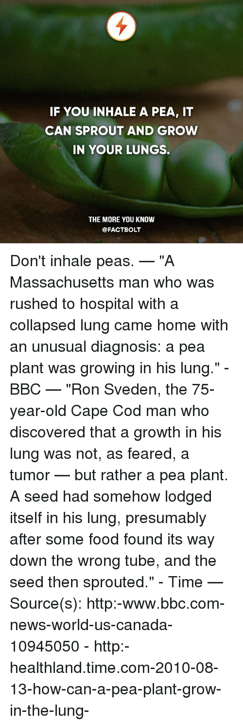 """lunging: IF YOU INHALE A PEA, IT  CAN SPROUT AND GROW  IN YOUR LUNGS.  THE MORE YOU KNOW  @FACT BOLT Don't inhale peas. — """"A Massachusetts man who was rushed to hospital with a collapsed lung came home with an unusual diagnosis: a pea plant was growing in his lung."""" - BBC — """"Ron Sveden, the 75-year-old Cape Cod man who discovered that a growth in his lung was not, as feared, a tumor — but rather a pea plant. A seed had somehow lodged itself in his lung, presumably after some food found its way down the wrong tube, and the seed then sprouted."""" - Time — Source(s): http:-www.bbc.com-news-world-us-canada-10945050 - http:-healthland.time.com-2010-08-13-how-can-a-pea-plant-grow-in-the-lung-"""
