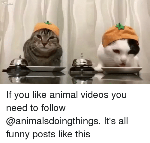 Animal Videos: If you like animal videos you need to follow @animalsdoingthings. It's all funny posts like this