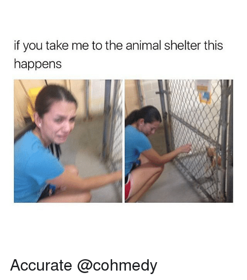 Cohmedy: if you take me to the animal shelter this  happens Accurate @cohmedy