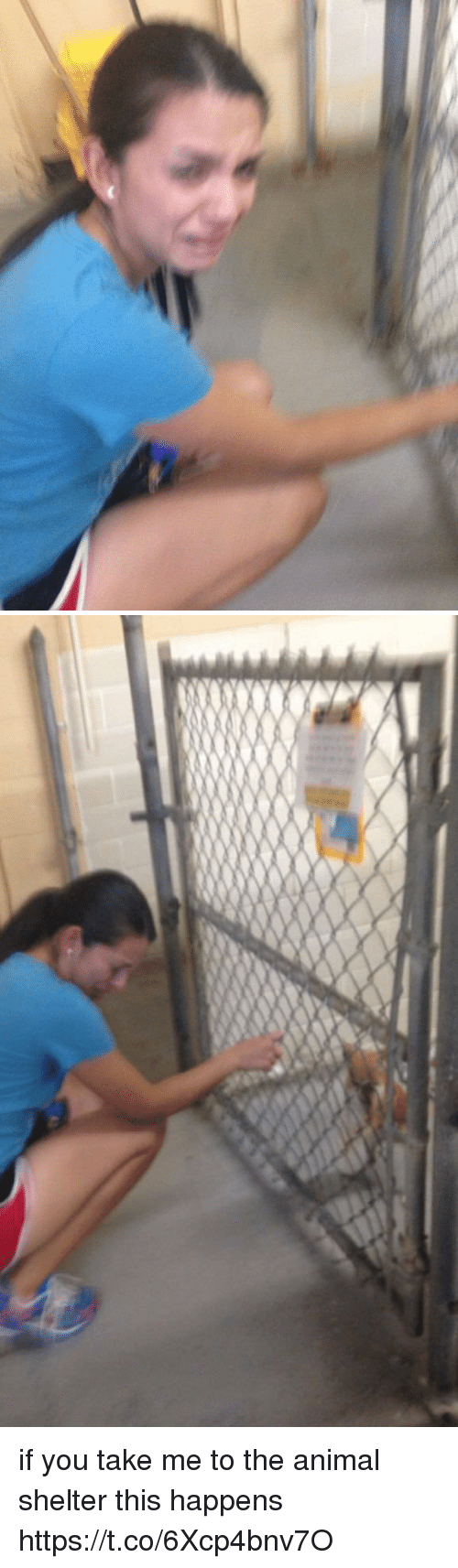Animal, Animal Shelter, and Girl Memes: if you take me to the animal shelter this happens https://t.co/6Xcp4bnv7O