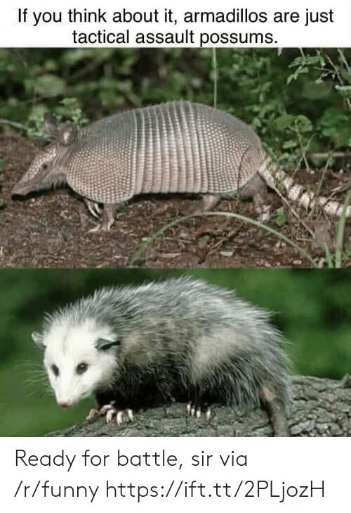Possums: If you think about it, armadillos are just  tactical assault possums Ready for battle, sir via /r/funny https://ift.tt/2PLjozH