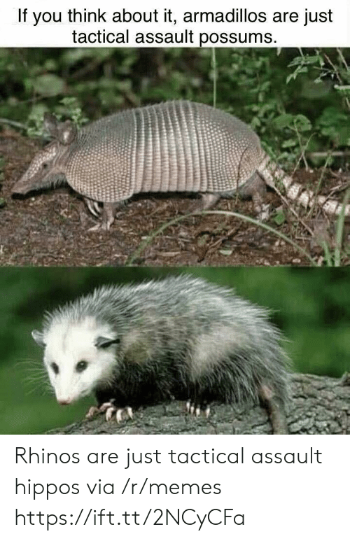 Possums: If you think about it, armadillos are just  tactical assault possums Rhinos are just tactical assault hippos via /r/memes https://ift.tt/2NCyCFa