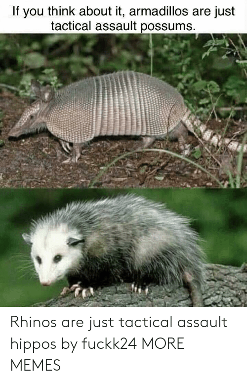 Possums: If you think about it, armadillos are just  tactical assault possums Rhinos are just tactical assault hippos by fuckk24 MORE MEMES