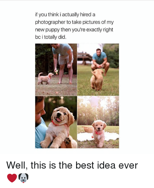 Memes, Best, and Pictures: if you think i actually hired a  photographer to take pictures of my  new puppy then you're exactly right  bc i totally did. Well, this is the best idea ever ❤️🐶