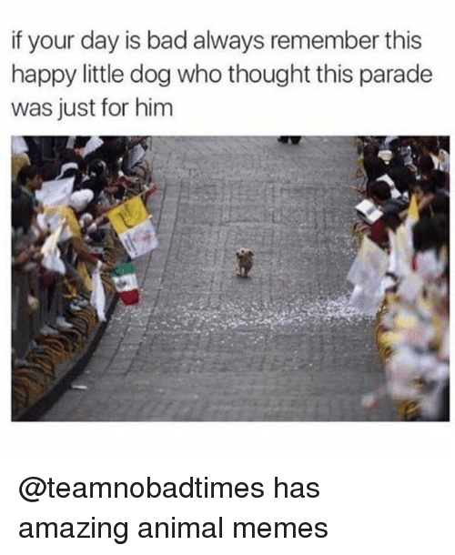 Bad, Funny, and Memes: if your day is bad always remember this  happy little dog who thought this parade  was just for him @teamnobadtimes has amazing animal memes