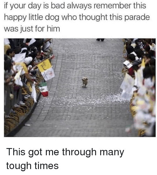 Tough Times: if your day is bad always remember this  happy little dog who thought this parade  was just for him This got me through many tough times