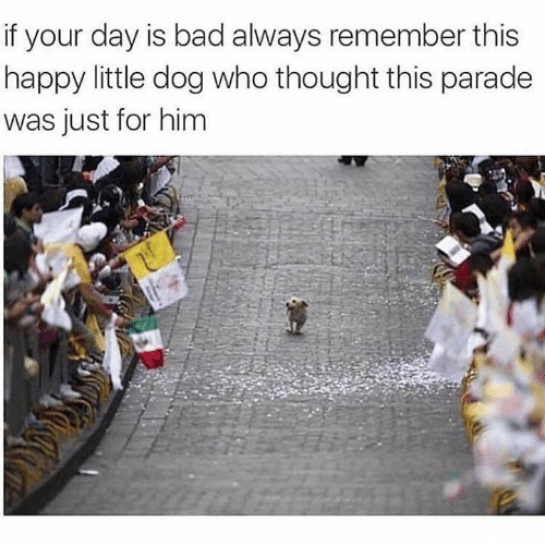 Bad, Memes, and Happy: if your day is bad always remember this  happy little dog who thought this parade  was just for him