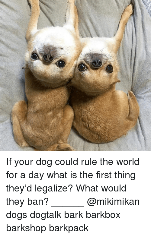 Dogs, Memes, and What Is: If your dog could rule the world for a day what is the first thing they'd legalize? What would they ban? ______ @mikimikan dogs dogtalk bark barkbox barkshop barkpack