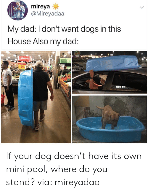 do you: If your dog doesn't have its own mini pool, where do you stand? via: mireyadaa