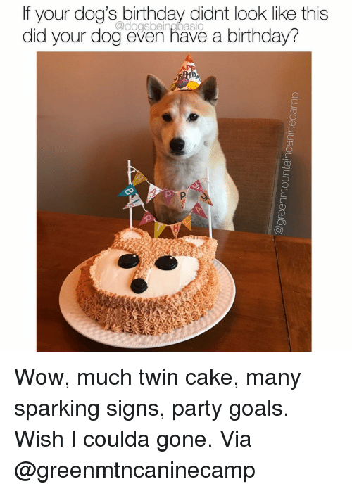 Birthday, Dogs, and Goals: If your dog's birthday didnt look like this  did your dog even have a birthday?  @dogsbeingbasic Wow, much twin cake, many sparking signs, party goals. Wish I coulda gone. Via @greenmtncaninecamp