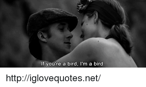 Http, Net, and Href: If you're a bird, I'm a bird http://iglovequotes.net/