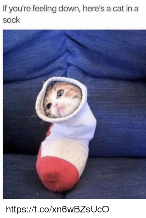 Memes, 🤖, and Cat: If you're feeling down, here's a cat  sock  in a https://t.co/xn6wBZsUcO