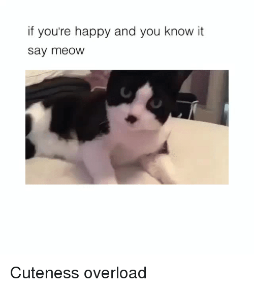 Happy, Overload, and You: if you're happy and you know it  say meoW Cuteness overload