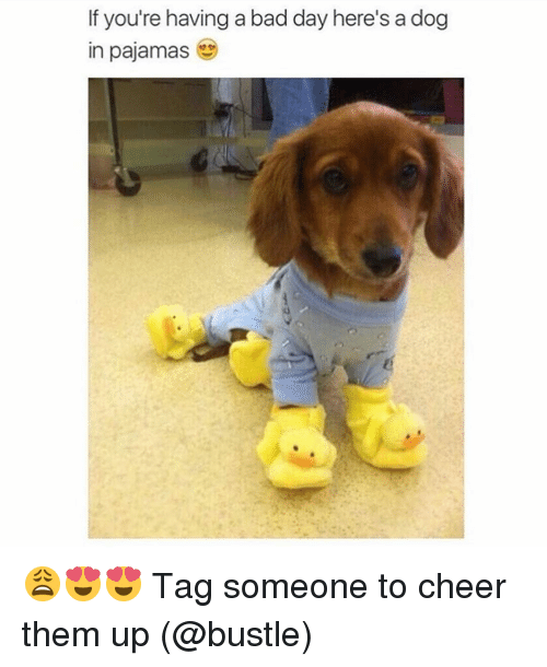 If Youre Having A Bad Day Heres A Dog In Pajamas Tag