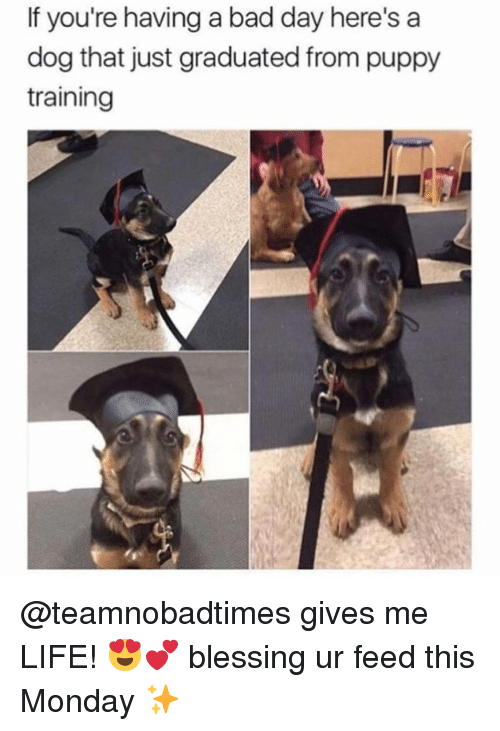 Bad, Bad Day, and Life: If you're having a bad day here's a  dog that just graduated from puppy  training @teamnobadtimes gives me LIFE! 😍💕 blessing ur feed this Monday ✨