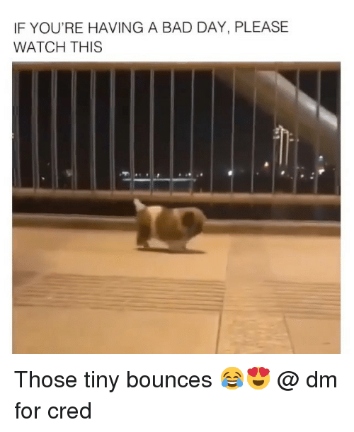 cred: IF YOU'RE HAVING A BAD DAY, PLEASE  WATCH THIS Those tiny bounces 😂😍 @ dm for cred