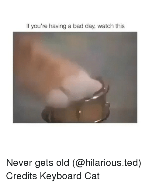 Bad, Bad Day, and Funny: If you're having a bad day, watch this Never gets old (@hilarious.ted) Credits Keyboard Cat