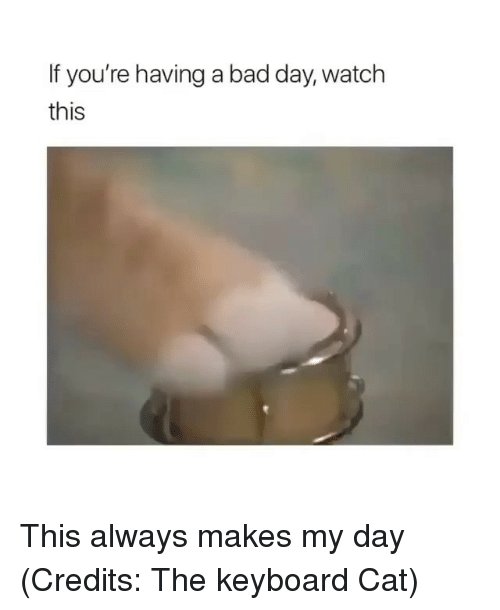 Bad, Bad Day, and Funny: If you're having a bad day, watch  this This always makes my day (Credits: The keyboard Cat)