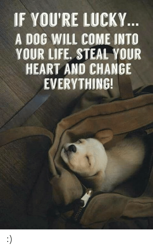 Dank, Life, and Heart: IF YOU'RE LUCKY  A DOG WILL COME INTO  YOUR LIFE, STEAL YOUR  HEART AND CHANGE  EVERYTHING! :)