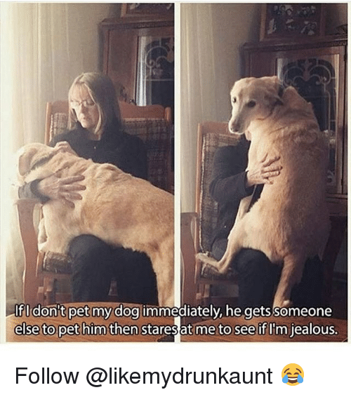 Jealous, Memes, and 🤖: Ifl don't pet my dog immediately, he gets Someone  else to pet him then stares at me to see if U'm jealous. Follow @likemydrunkaunt 😂
