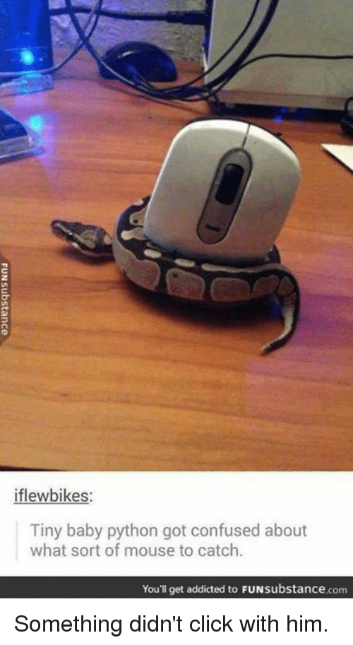 tiny babies: iflewbikes:  Tiny baby python got confused about  what sort of mouse to catch.  You'll get addicted to FUNsubstance.com Something didn't click with him.