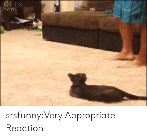 Tumblr, Blog, and Http: IFS  com srsfunny:Very Appropriate Reaction