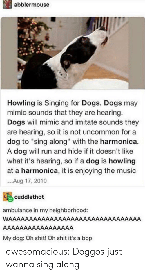 "howling: İl abblermouse  Howling is Singing for Dogs. Dogs may  mimic sounds that they are hearing.  Dogs will mimic and imitate sounds they  are hearing, so it is not uncommon for a  dog to ""sing along"" with the harmonica.  A dog will run and hide if it doesn't like  what it's hearing, so if a dog is howling  at a harmonica, it is enjoying the music  ...Aug 17,2010  4cuddlethot  ambulance in my neighborhood:  My dog: Oh shit! Oh shit it's a bop awesomacious:  Doggos just wanna sing along"