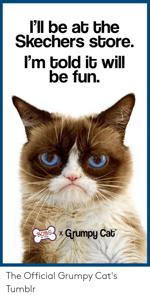 Official Grumpy: I'll be at the  Skechers store.  I'm told it will  be fun.  Grumpy Cat  BOBSX  Shechers. The Official Grumpy Cat's Tumblr