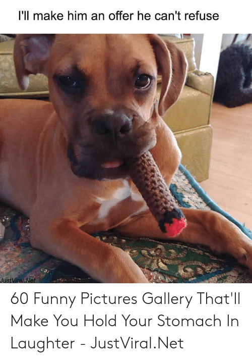 funny pictures: I'll make him an offer he can't refuse  JustViral Net 60 Funny Pictures Gallery That'll Make You Hold Your Stomach In Laughter - JustViral.Net