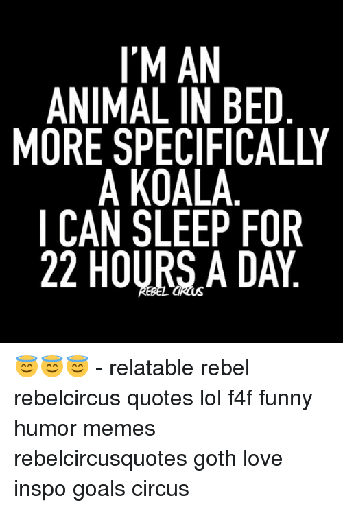Memes, 🤖, and Koala: I'M AN  ANIMAL IN BED  MORE SPECIFICALLY  A KOALA  CAN SLEEP FOR  22 HOURSA DAY 😇😇😇 - relatable rebel rebelcircus quotes lol f4f funny humor memes rebelcircusquotes goth love inspo goals circus