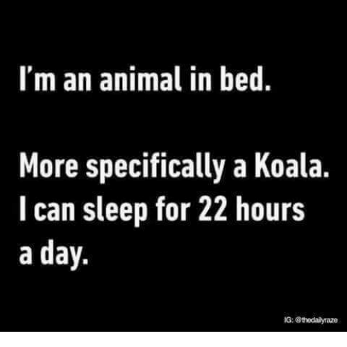 Memes, Animal, and Sleep: I'm an animal in bed.  More specifically a Koala.  I can sleep for 22 hours  a day.  G: @thedailyraze
