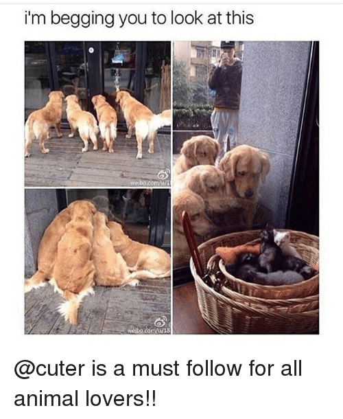 Memes, Animal, and 🤖: i'm begging you to look at this  welbo.com/u/l  weibo.com/a/18 @cuter is a must follow for all animal lovers!!