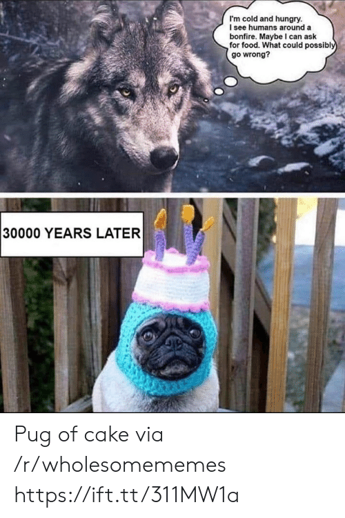 pug: I'm cold and hungry.  I see humans around a  bonfire. Maybe I can ask  for food. What could possibly  go wrong?  30000 YEARS LATER Pug of cake via /r/wholesomememes https://ift.tt/311MW1a